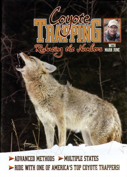 Coyote Trapping Reducing the Numbers - by Mark June 2525016