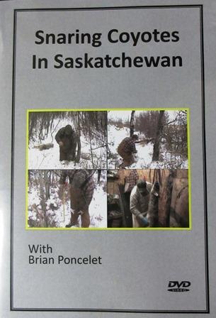 Snaring Coyotes in Saskatchewan 0001517