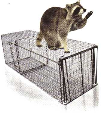 Northern Live Raccoon Trap 12x12x36 121236