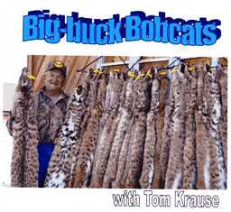Big-buck Bobcats DVD #bbbkrause
