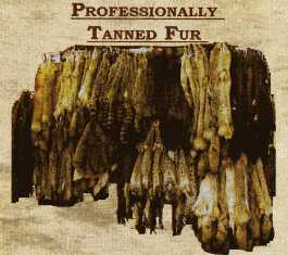 Professionally Tanned Fur protanfur